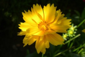 yellow close-up small
