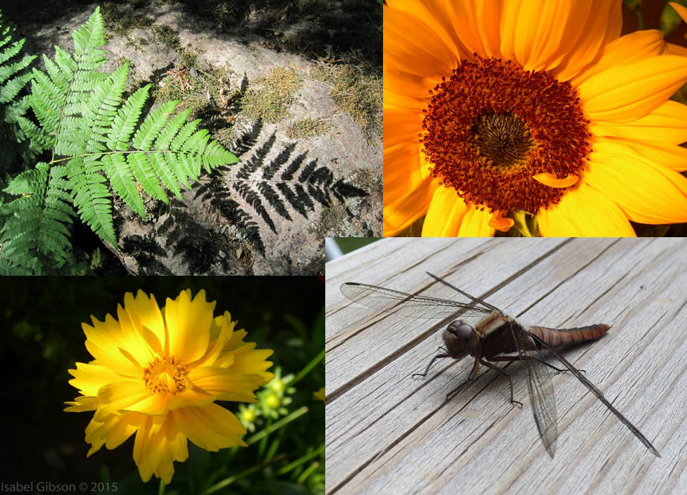Montage of nature photography by Isabel Gibson