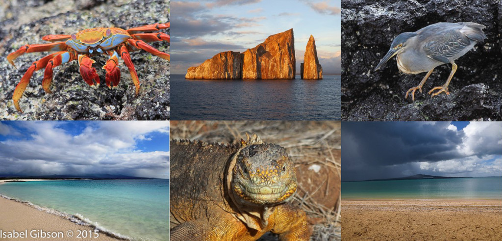 Montage of 6 nature photos (crab, heron, iguana, and beaches)