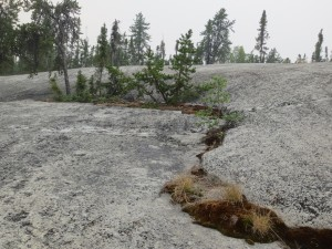Foreground to mid-ground is exposed grey bedrock with crack filled with scraggly spruce trees and moss.