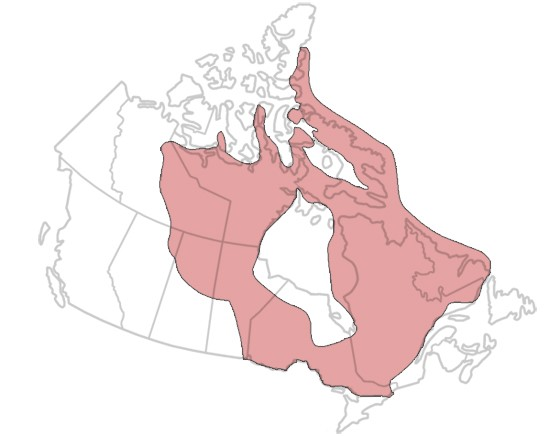 Line drawing map of Canada with overlay of area covered by Canadian Shield.