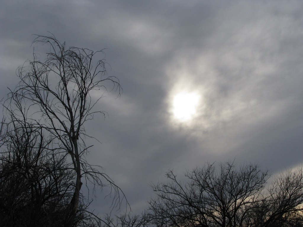 Silhouettes of bare trees against a dark sky with an obscured sun.