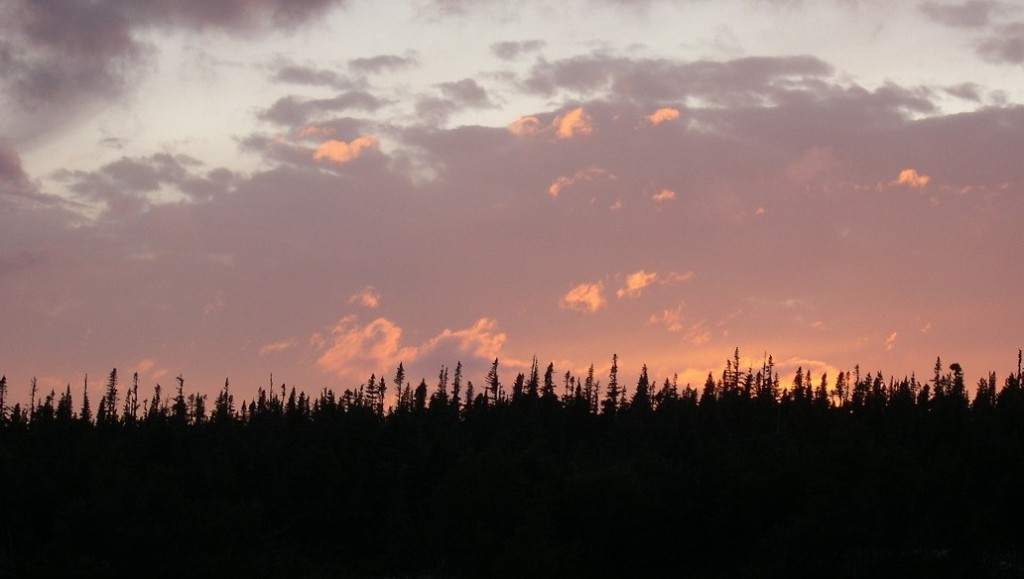 Purple and peach sunset above a black border of black spruce.