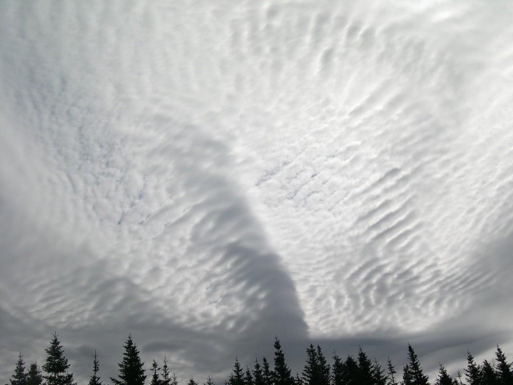 Black spruce underlining striated clouds across the sky.