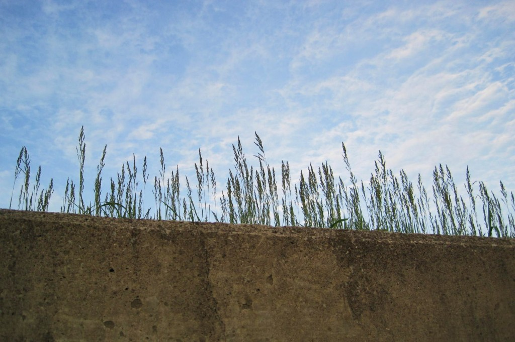 Grass poking up behind retaining wall over my head.