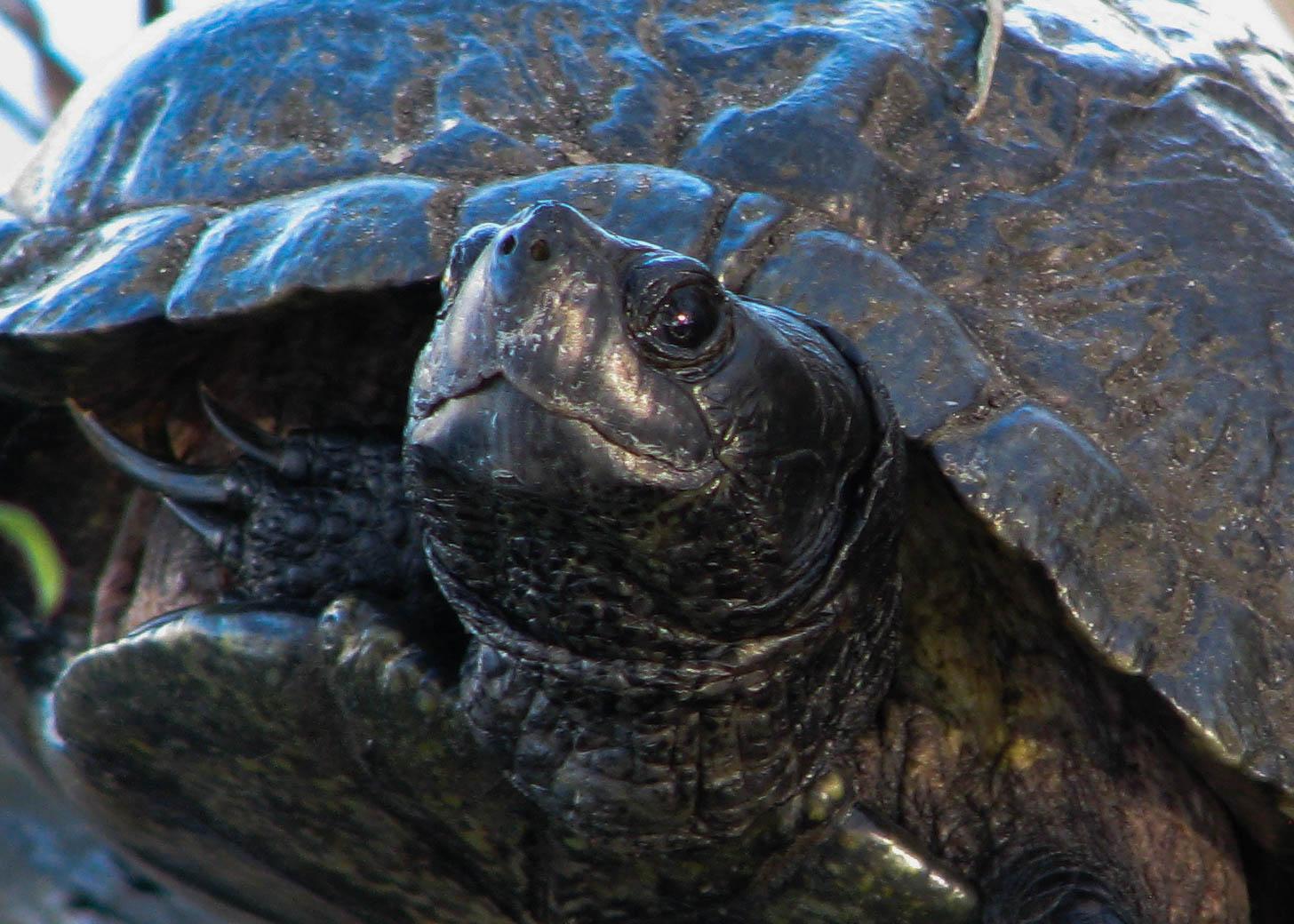 Head shot of turtle.