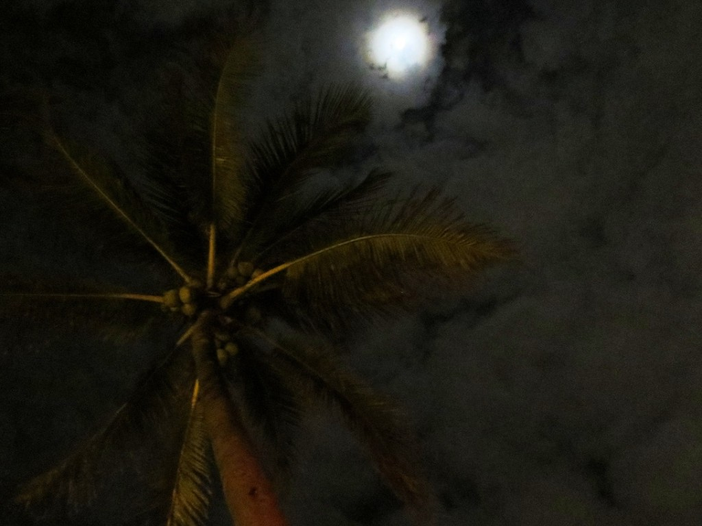Nighttime shot looking up at palm tree, full-ish moon, and a cloudy sky.
