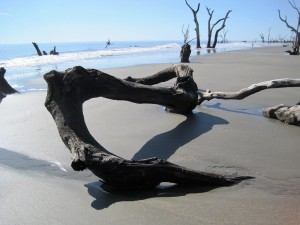 Driftwood on sandy beach.