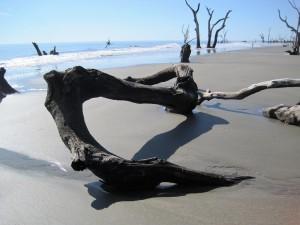 Driftwood on sandy beach.