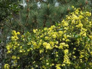 Full-frame view of yellow bush.