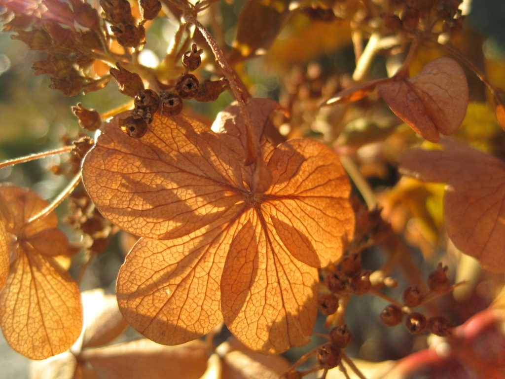 Afternoon sun through dried leaves.