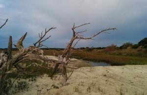 Marshy area near beach in ealry morning light.