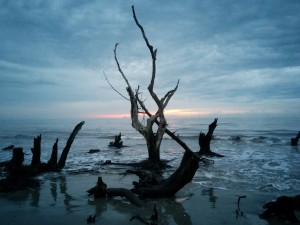 Driftwood in surf; dark blue sunrise sky behind.