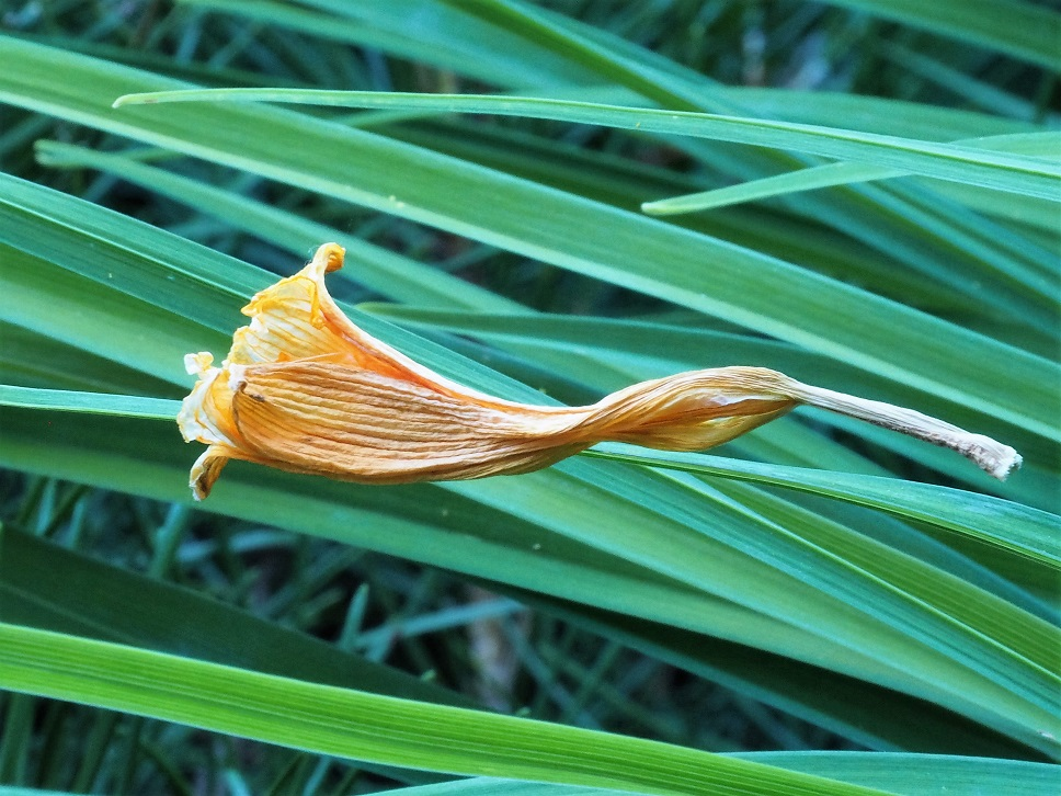 Dried day lily blossom apparently floating in mid-air.