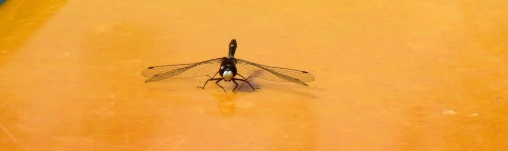 Black dragonfly on yellow kayak
