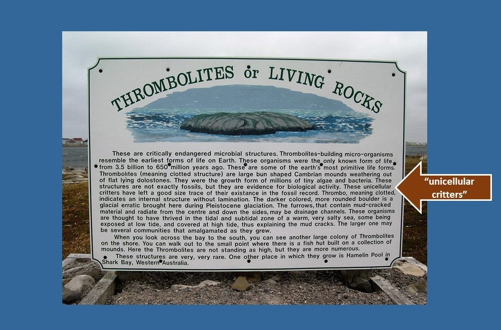 Interpretive sign at site of thrombolites.
