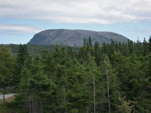 Gros Morne mountain on horizon; spruce forest in foreground.