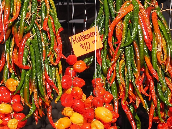 Close-up of hot peppers haning in outdoor stall.
