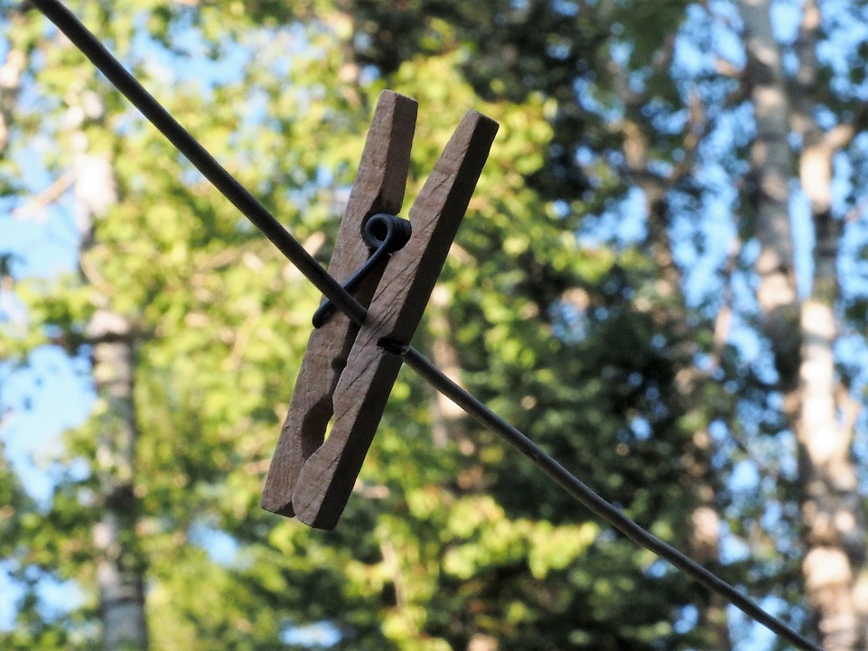 Wooden clothespin on line; birch tress in background.