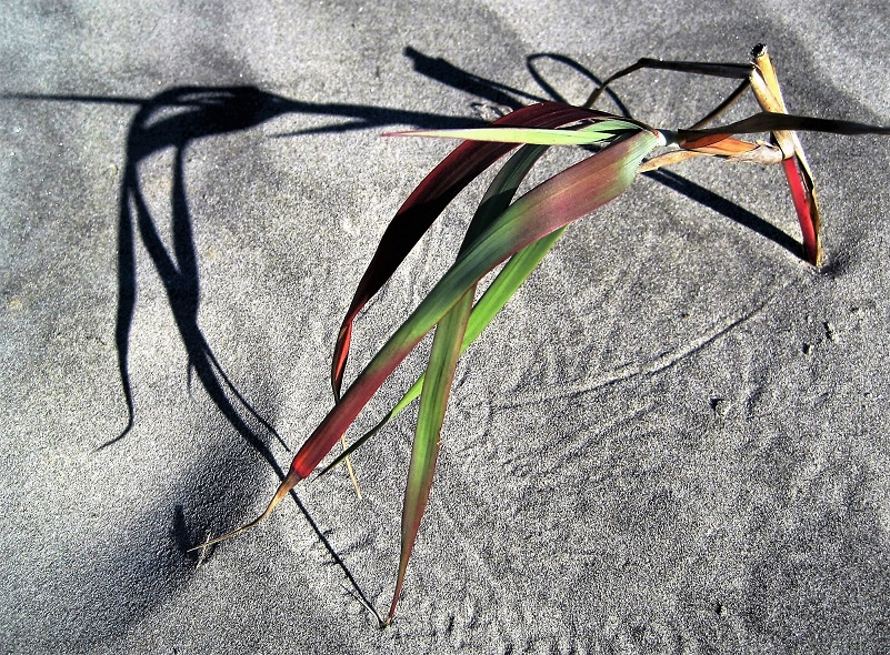 Grass plant and its shadow in sand.