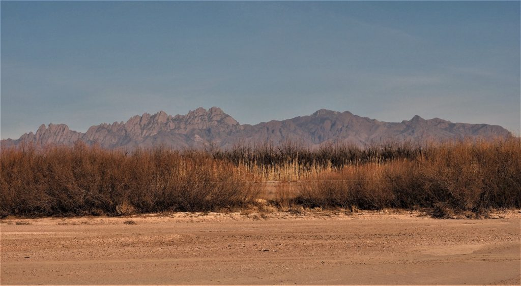 Sand of dry Rio Grande riverbed, willow bushes and grasses, mountains on horizon.