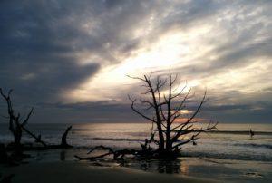 Sunrise backlighting driftwood on the beach at Bull Island.