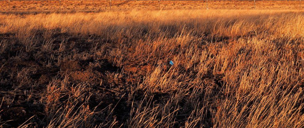 Sunset-lit prairie grass