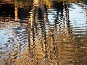 Wavy, gold reflection of leafless tree