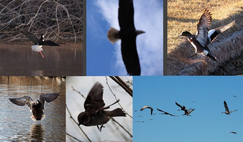 Six fuzzy photos of birds in flight.