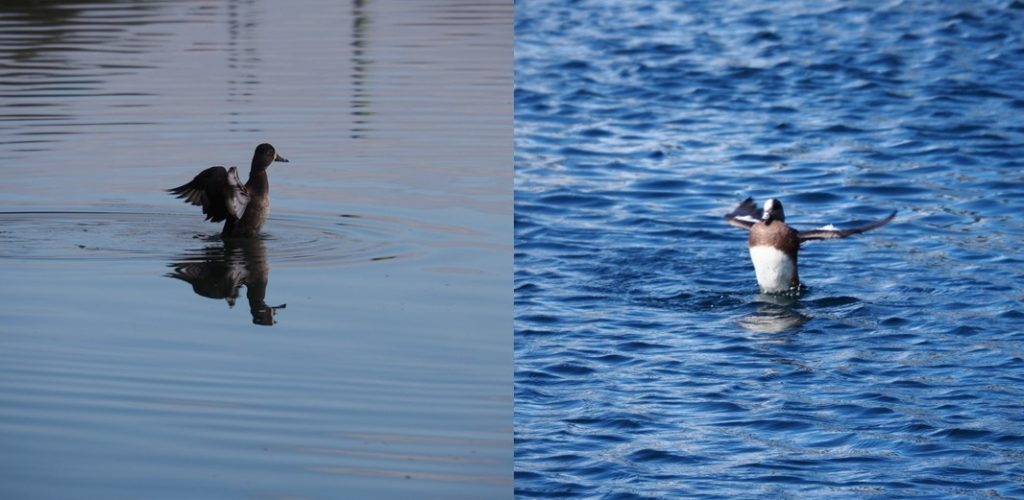 Two photos of birds too far away.