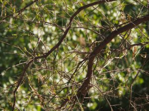 Bare branches with mature green leaves in background