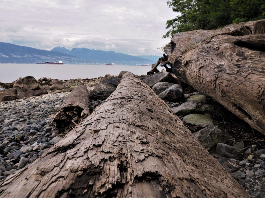 View along driftwood log on rocky beach with inlet and mountains in background.