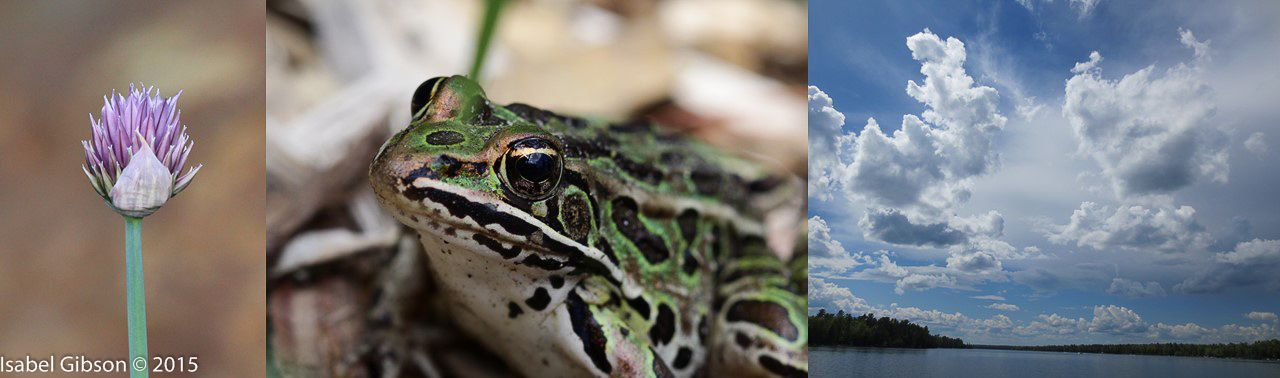 Montage of photos of chive flower, leopard frog, and clouds over White Lake