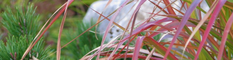 Red and tan grass leaves arcing left in foreground; out-of-focus boulder in background.
