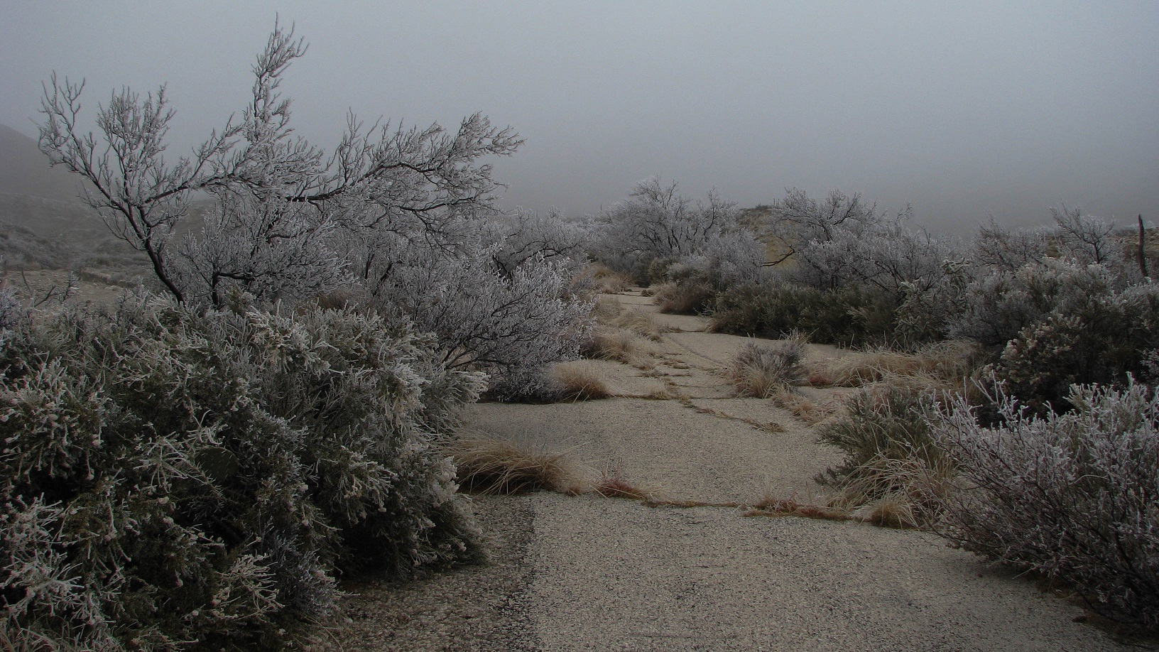 Ice Storm, Carlsbad Caverns NM