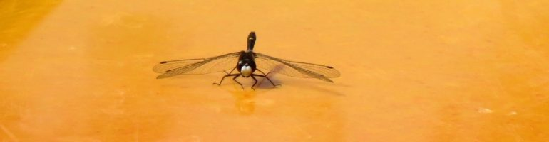Black dragonfly on yellow kayak