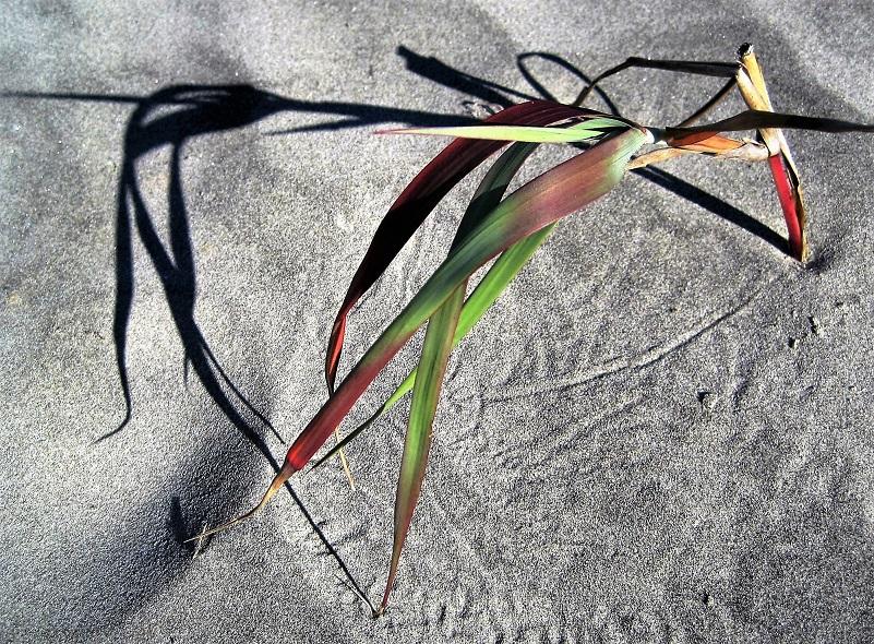 Grass, Bulls Island SC