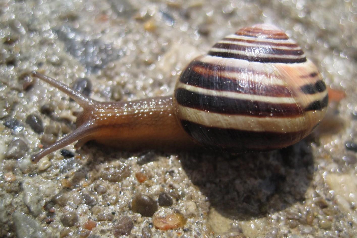 Snail on aggregate sidewalk