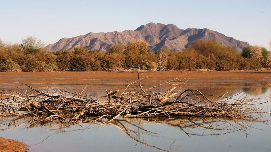 Brush and reflection in foreground; mountains in background