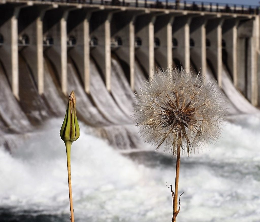 Close-up of dandelion seed head with dam in background