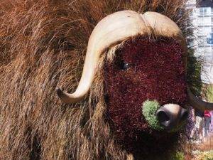 Muskox statue as floral or horticultural art.