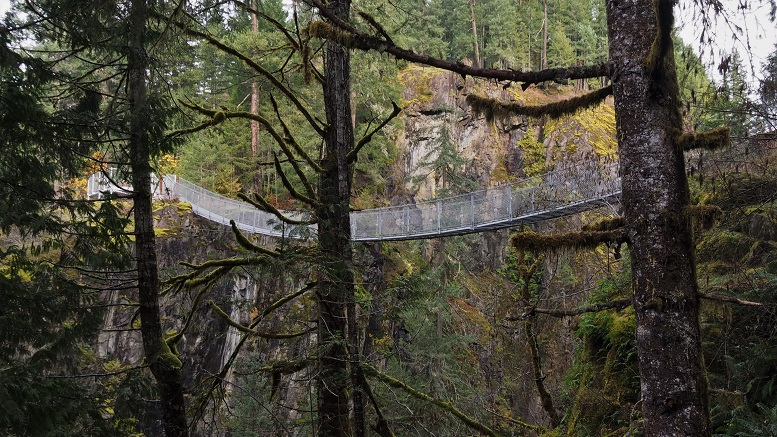 View of suspension bridge through the trees, over the gorge.