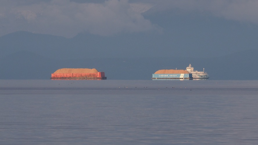 Barges carrying sawdust in late-afternoon light.