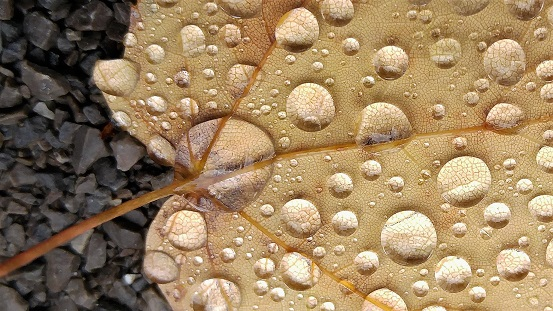 Close-up of dried beige leaf with raindrops on it.