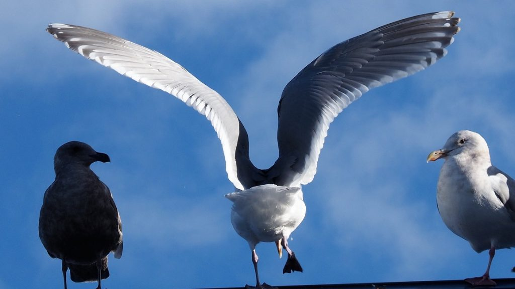 Three gulls: one in light, one in shadow, one in both.