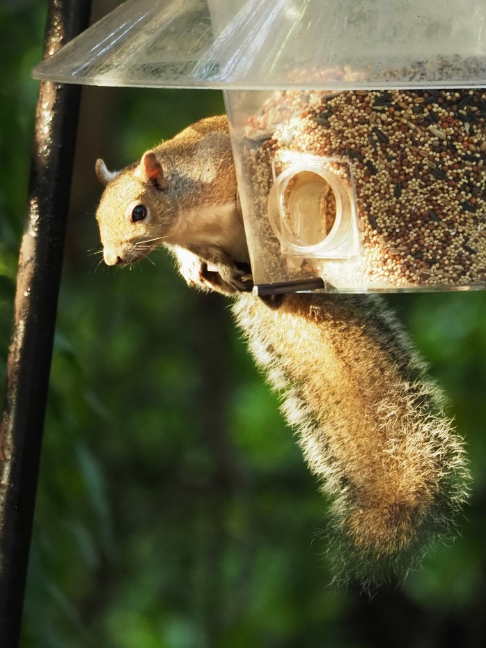 Squirrel perched on bird feeder