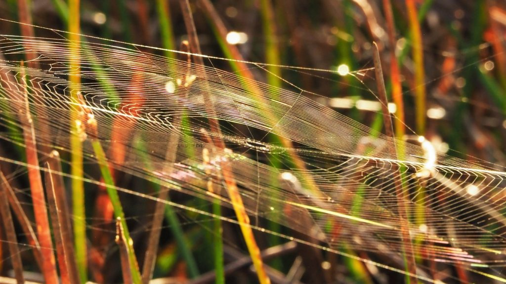 Oval, angled spiderweb, catching the morning light