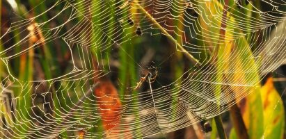 Spiders and Spiderwebs, Boynton Beach FL