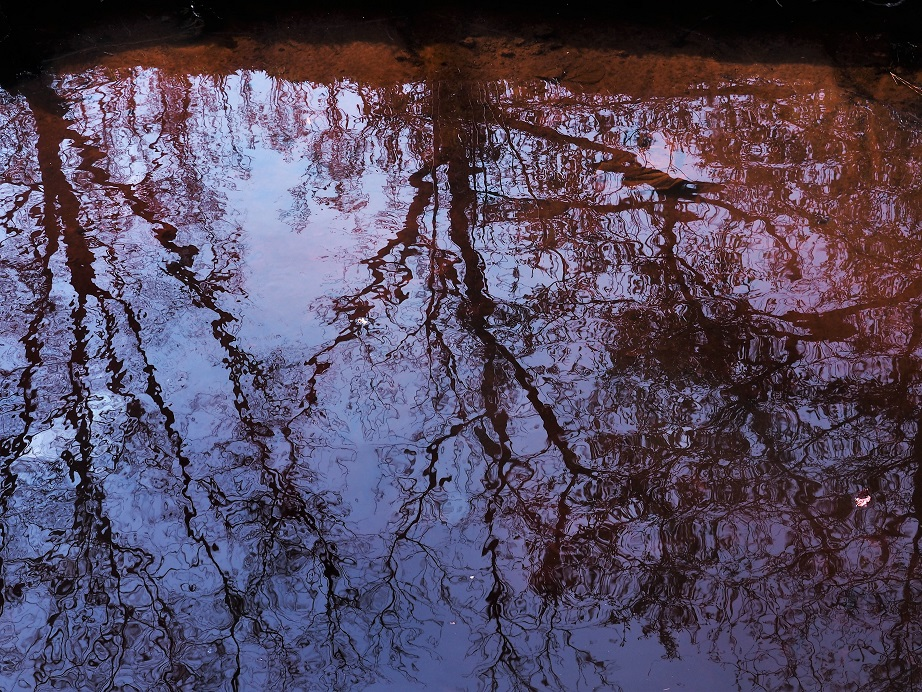 Leafless tree branches reflected in tannin-stained river water.