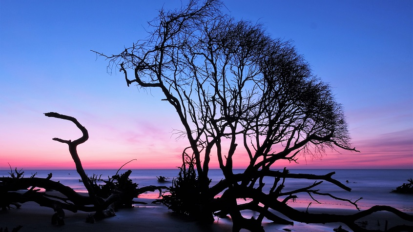 Tree and driftwood backlit by sunrise over ocean